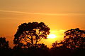 Sunset over Angkor (4438871688).jpg