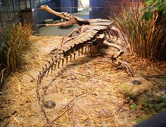 Sarcosuchus - Reconstructed S. imperator skeleton from behind at the Indianapolis Children's Museum