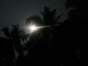 super moon day moon shining through coconut pa...