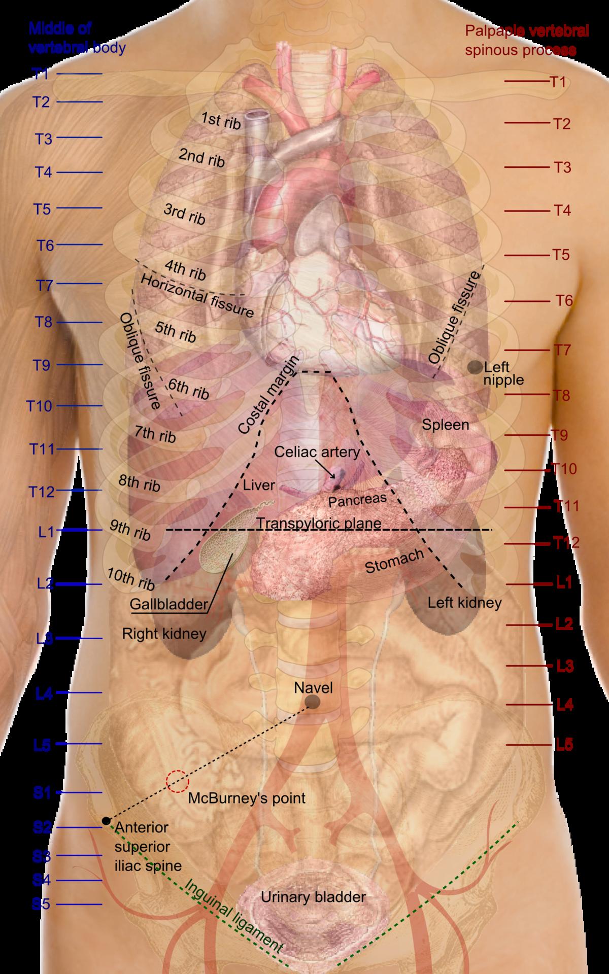 Osteoartróza – Wikipedie