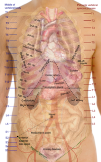 Situs solitus normal arrangement (position) of internal (thoracic and abdominal) organs: heart is on the left with the pulmonary atrium on the right and the systemic atrium on the left along with the cardiac apex