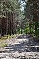 Sushybaba Turiiskyi Volynska-Ozerianskyi nature reserve-road to Berezhyste lake-3.jpg