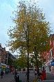 Sutton High Street trees (13).jpg