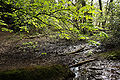 Sutton Park Walk 407 2.jpg