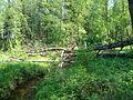 Svente Parish, LV-5473, Latvia - panoramio - alinco fan (6).jpg