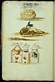 Symbolic alchemical watercolour drawings Wellcome L0033065.jpg