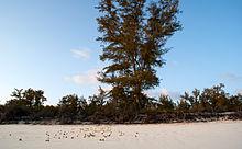 Una spiaggia sull'isola Juan de Nova.