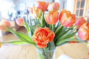 TULIPS red yellow in vase overexposed (oransje oransje, tulipaner overeksponert) Norway 2019-02-13 3.jpg