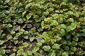 TU Delft Botanical Gardens 15.jpg