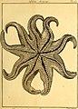 Tableau encyclopédique et méthodique des trois règnes de la nature (1791) (14581510778).jpg