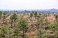 Taglamyrens naturrservat - panoramio.jpg
