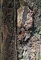 Termite (2719237309).jpg