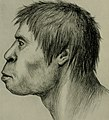 The American Museum journal (c1900-(1918)) (18160384885).jpg