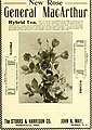 The American florist - a weekly journal for the trade (1904) (18137577235).jpg