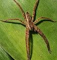 The Beautiful And Misunderstood Spiders (212516351).jpeg