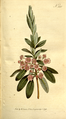 The Botanical Magazine, Plate 331 (Volume 10, 1796).png