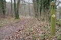 The Cotswold Way in Buckholt Wood - geograph.org.uk - 101874.jpg