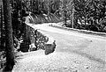 The Deer Creek Bridge on the new Ohanapecosh-Chinoak Pass Highway, Mount Rainier National Park. (e3d82dda364b4a0dbcdc5f2961504139).jpg