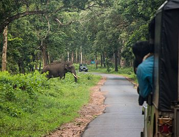 The Indian Elephant.jpg