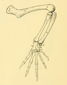 The Osteology of the Reptiles-192 iuyhgh jhg hg hv jhg fr frt.png