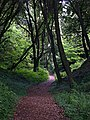 The Undercliff Path near Pinhay - geograph.org.uk - 334331.jpg