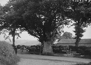 The old oak with letter-box inside the trunk Clun Salop