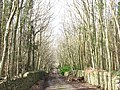 The road through Warren Covert - geograph.org.uk - 367067.jpg