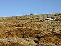 The summit of Pen y Garn - geograph.org.uk - 879247.jpg