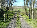 The track to Cosyglen Wood. - geograph.org.uk - 423449.jpg