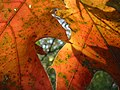 Through two leaves.jpg
