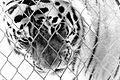 Tiger behind wire netting.jpg