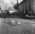 Tihany 1962, libák a Kossuth Lajos utcában - Fortepan 58447.jpg