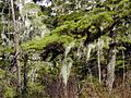 Tongass National Forest 391.jpg
