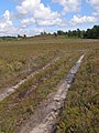 Track on Kingston Great Common, New Forest - geograph.org.uk - 502624.jpg
