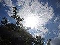 Tree, clouds, sun.jpg