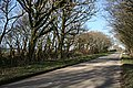 Tree lined road - geograph.org.uk - 330692.jpg