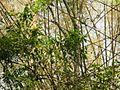 Trekking @ Wayanad wildlife Sanctuary - panoramio (7).jpg