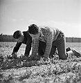 Twee mannen op het veld in het Joodse werkdorp in de Wieringermeer, Bestanddeelnr 254-4927.jpg