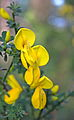 US-CA-NevadaCity-Woolman-2012-04-29T18-31-01 v1.JPG