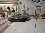 UVU pendulum (33279728291).jpg