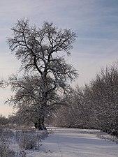 Un árbol en el camino.JPG