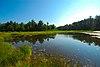 Upper Buckatabon Springs.jpg