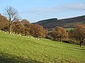 Upper Derwent valley - geograph.org.uk - 282216.jpg