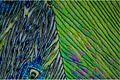 Vanillin in polarisiertem Licht.jpg