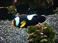 Vannes - aquarium (13).jpg