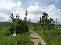Velická dolina - nejjižnější část u Tatranské Polianky.JPG