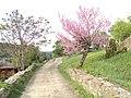 Veliko Tarnovo 057.jpg