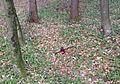 Vester Slovenia - Gorge Mass Grave.jpg