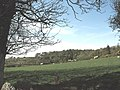 View across sheep pastures towards Coed y Green woodland - geograph.org.uk - 798268.jpg