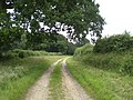 View down track towards Old Covert - geograph.org.uk - 481510.jpg
